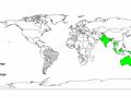 World distribution of Albizia lebbeck